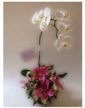 bunga-meja-anggrek-bulan-surabaya